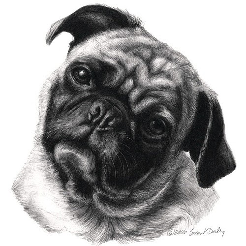 10-Pug-Susan-Donley-Cats-and-Dogs-Featured-in-Pencil-Portraits-www-designstack-co