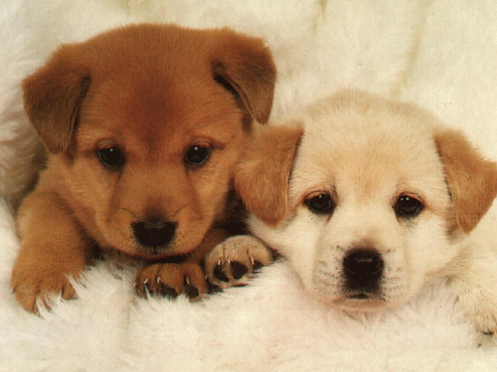 The Dog In World Photo Of Puppy Dogs Very Pretty