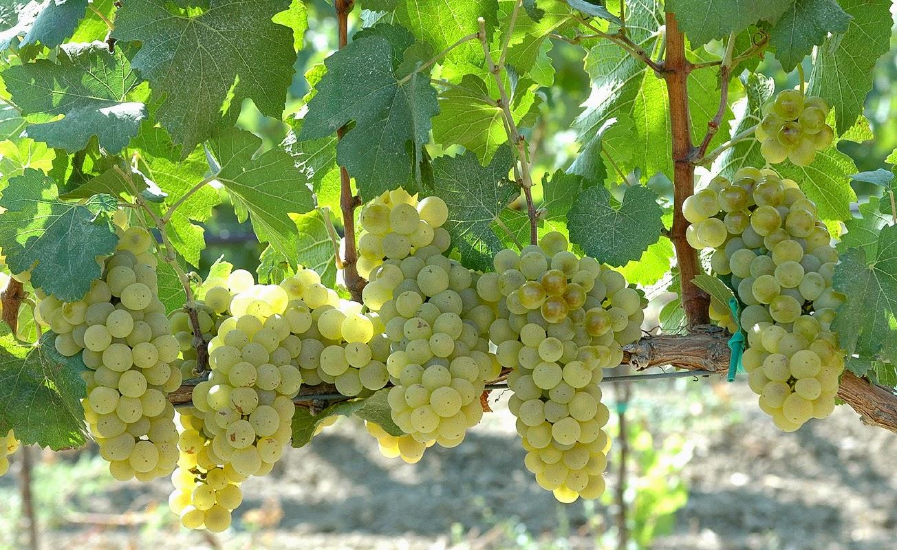 Stemmari winery in Sicily