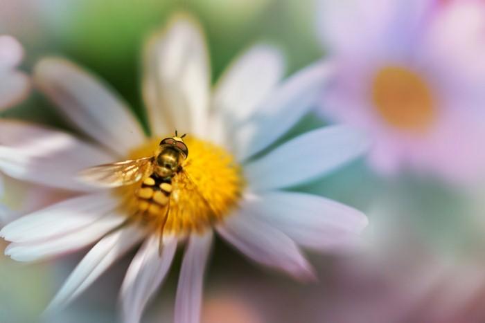 Необычные фотографии насекомых 12