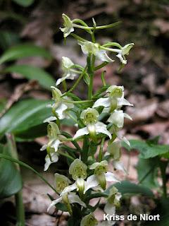 Orchidées de France