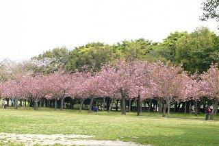 Cibodas adalah tujuan wisata alam yang terletak di kaki Gunung Gede Pangrango, khususnya yang terletak di wilayah administrasi desa Cimacan Cipanas Puncak Kabupaten Cianjur Provinsi Jawa Barat. Karena lokasinya dekat dengan wilayah Puncak, sering kali sebagian wisatawan memanggil Cibodas Puncak. Meskipun tata letak zonasi, Puncak adalah wilayah administrasi desa Ciloto