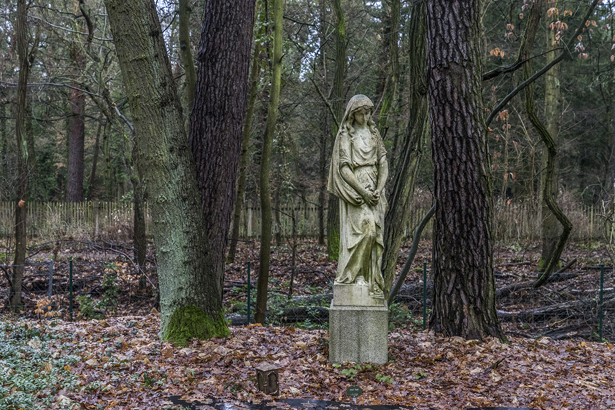 cemetery in the forest - photo #4