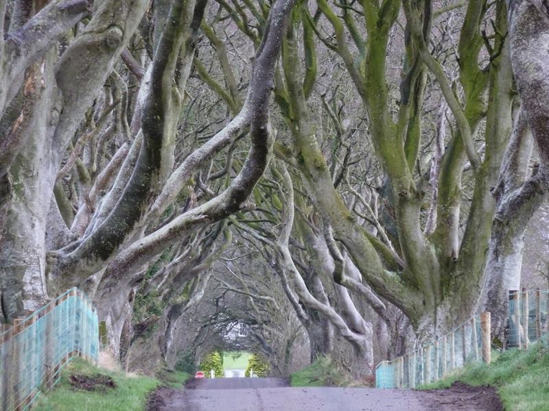 The Dark Hedges | The Most Photographed Natural Phenomena in Ireland