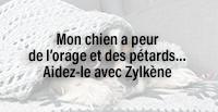 Mon chien a peur de l'orage et des pétards… Aidez-le avec Zylkène