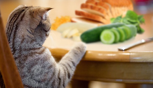 Human Foods that are Dangerous for Cats