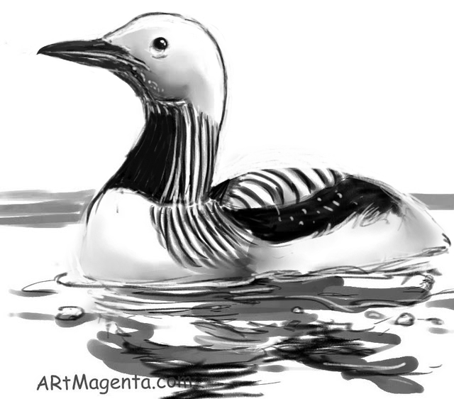 Arctic Loon is a bird drawing by artist and illustrator Artmagenta