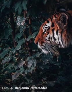 sergio de castro pinto poemas animais ambiente de leitura carlos romero