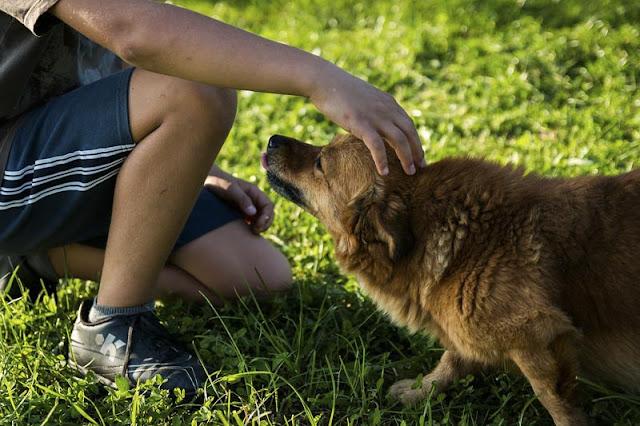 Introducen en centros educativos terapia con perros para alumnos con diversidad funcional