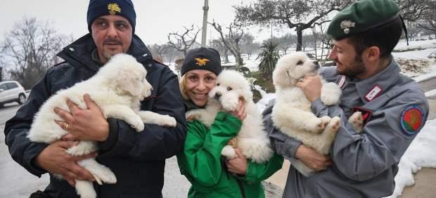 El milagro de los cachorros rescatados del hotel sepultado por la nieve