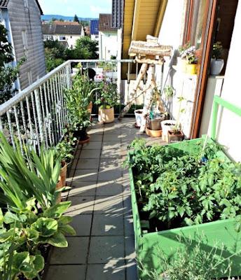 Cara Berkebun di rumah dengan lahan yang sempit