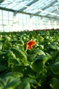 Entretien des plants en pépinière