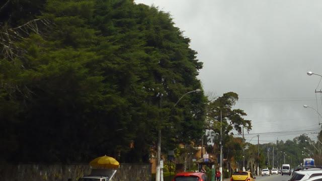 Área Verde Urbana no Código Florestal