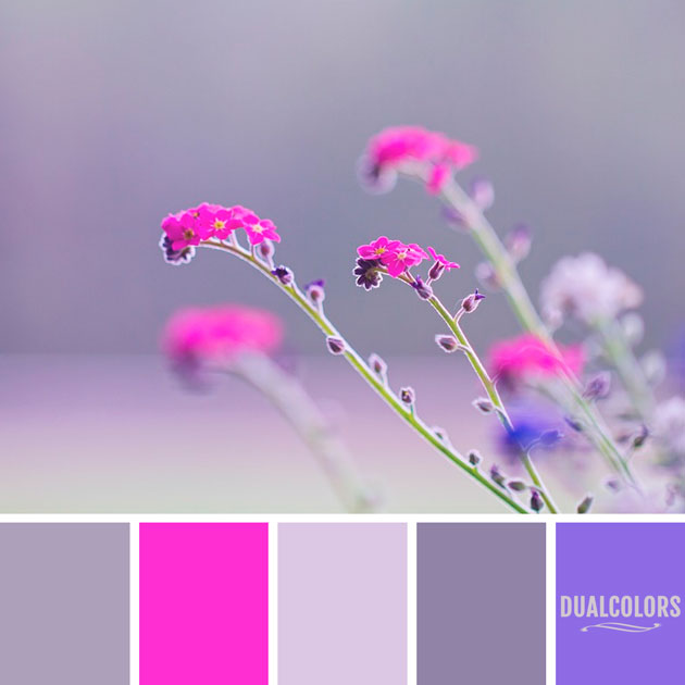 color_paleta_239