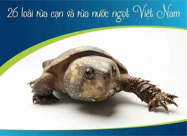 Nhận diện 26 loài rùa cạn và rùa nước ngọt tại Việt Nam