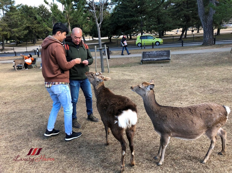 singapore parenting blog nara deer feeding adventure