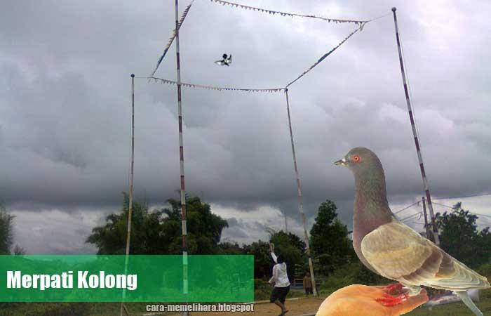 Download 101 Foto Gambar Burung Merpati Kolong  Paling Unik Gratis