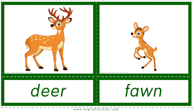 Animals and their babies -- deer - fawn -- printable flashcards