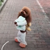 Video 'Comel' Anjing Berjalan Seperti Manusia Cuit Hati Netizen, Tapi Hanya Untuk Seketika