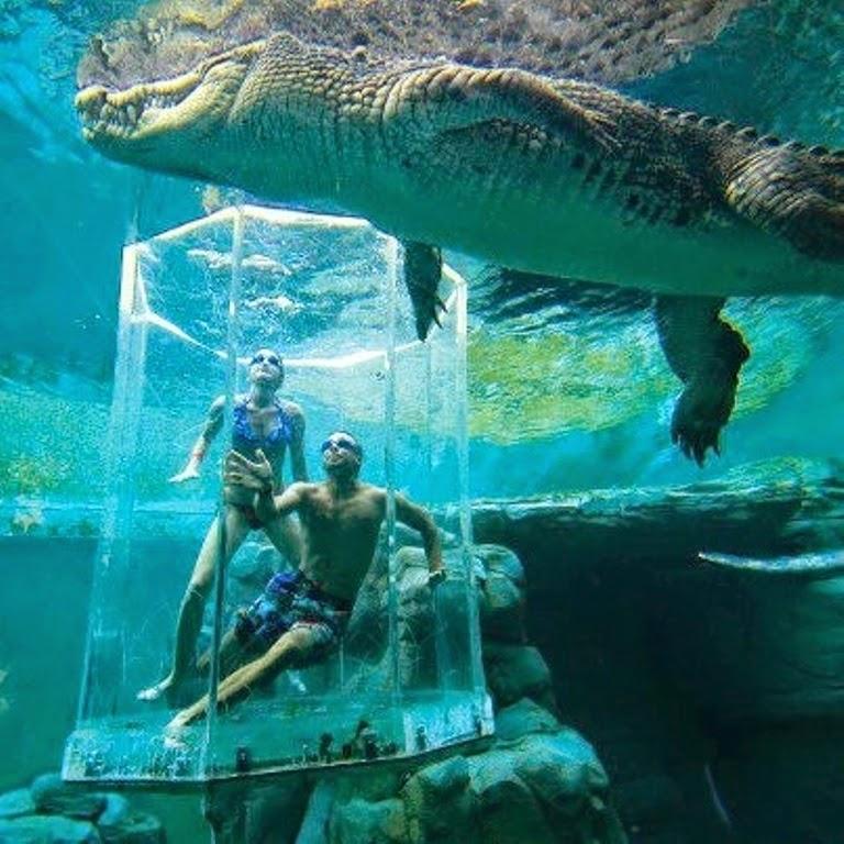 10 Best Adventure Holiday Destinations | Crocosaurus Cove Aquarium, Australia