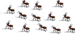 Odorous House Ants How to get rid of ants naturally from your house