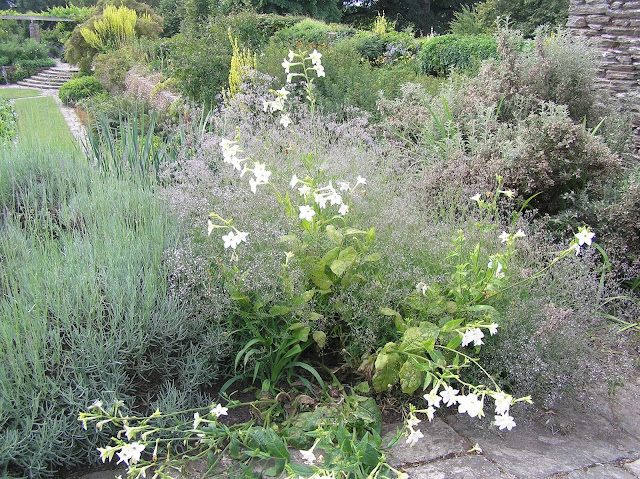 ogród Gertrude Jekyll