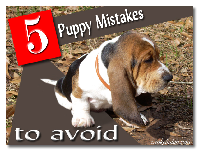 Basset Hound pup with caption 5 puppy mistakes to avoid