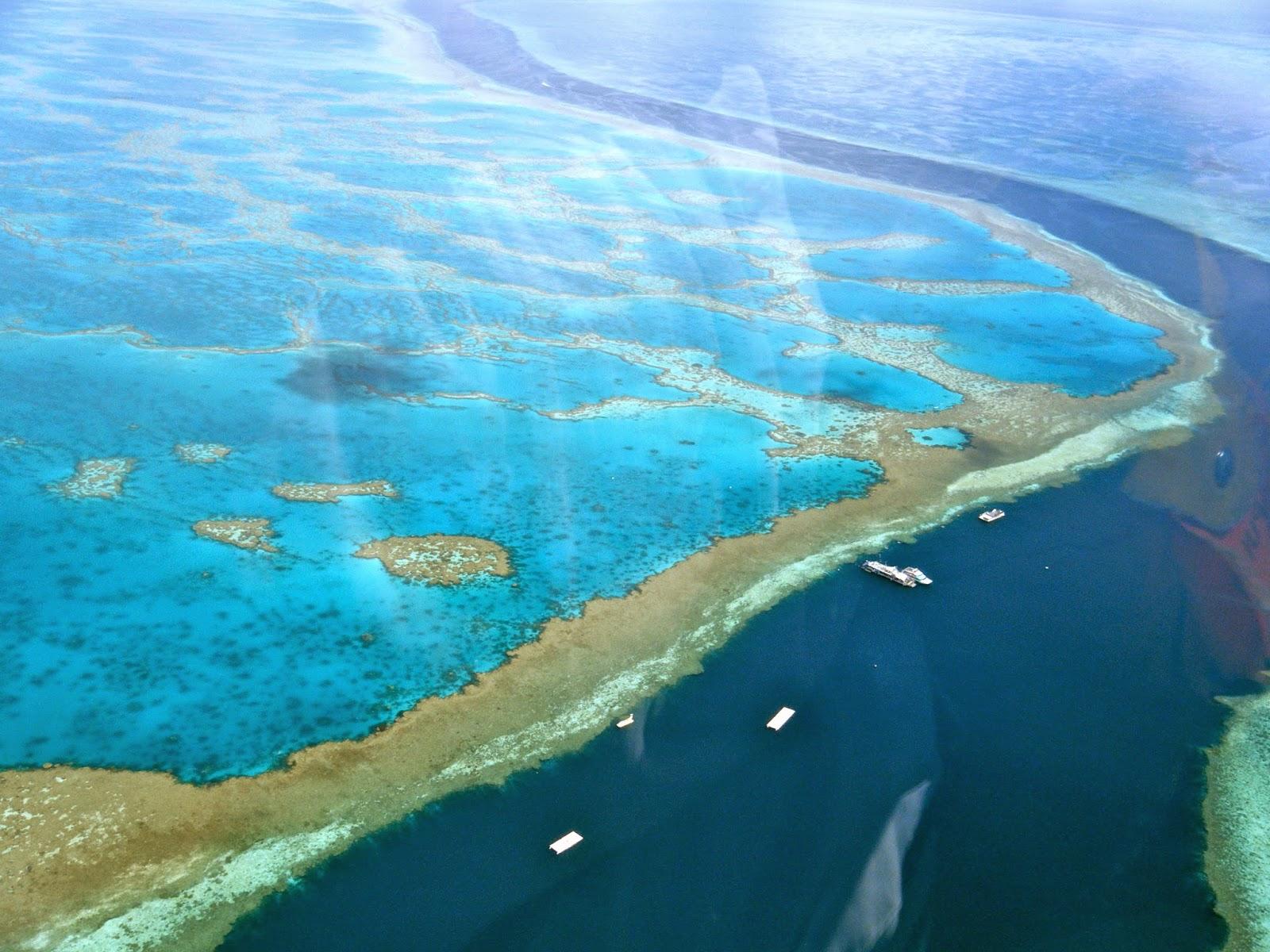 صور من الحاجز المرجاني