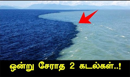 Gulf Of Alaska – Reason Behind Why Two Oceans Doesn't Merge