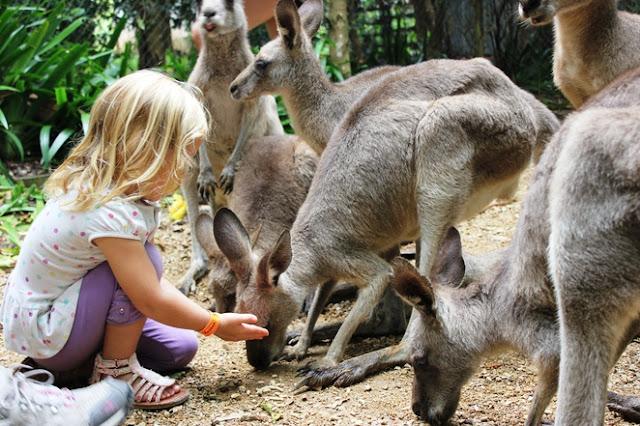 Passeios com crianças no Zoo Safari Park em San Diego na Califórnia