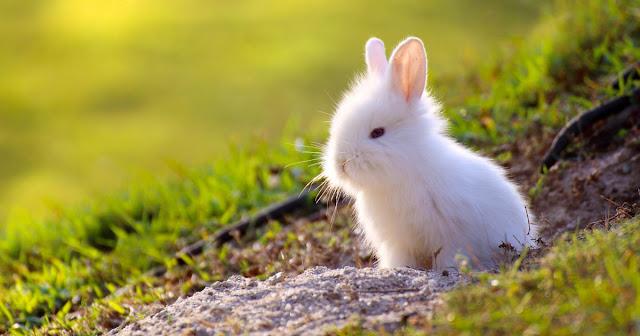 Rabbit's Amazing Facts in Hindi