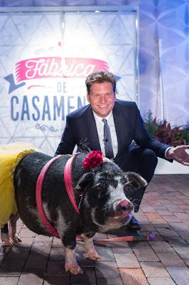 Bertolazzi com a porca que levará com ele as alianças aos noivos - Crédito: Gabriel Gabe/SBT
