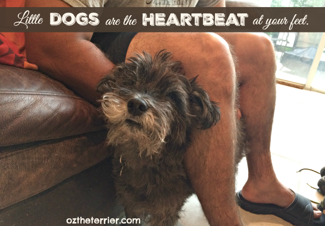 Little Dogs are the Heartbeat at your Feet
