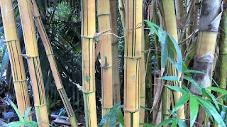 mistik misteri bambu kermat jimat pusaka