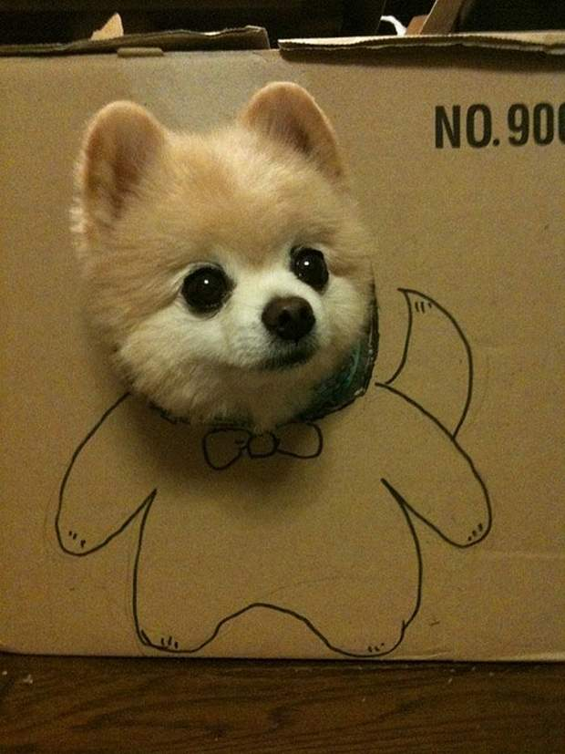 Cute dogs - part 122, cute dog photos, best funny dogs, dog picture gallery