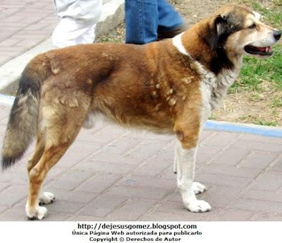 Foto de un perro doméstico en la calle, foto de perro de Jesus Gómez
