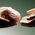 زراعة الاعضاء البشرية.. تحديات و ٱفاق