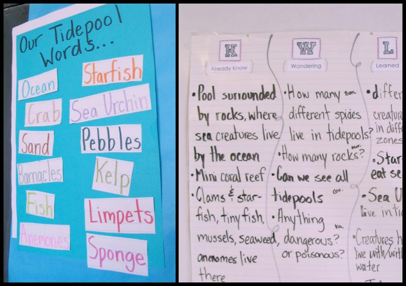 The Educators Companion Room 14 Tide Pool Inquiry