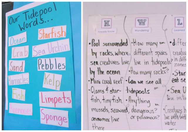 First Grade Tide Pool Inquiry