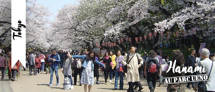 Hanami au parc Ueno