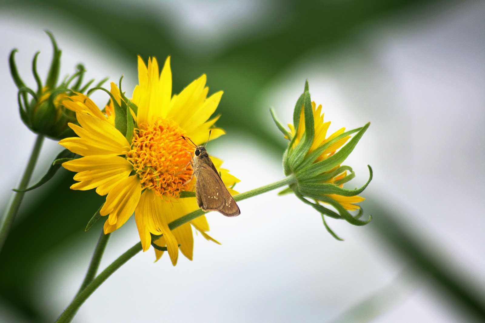 Live your hobbies photography the butterfly on the the yellow flowers mightylinksfo