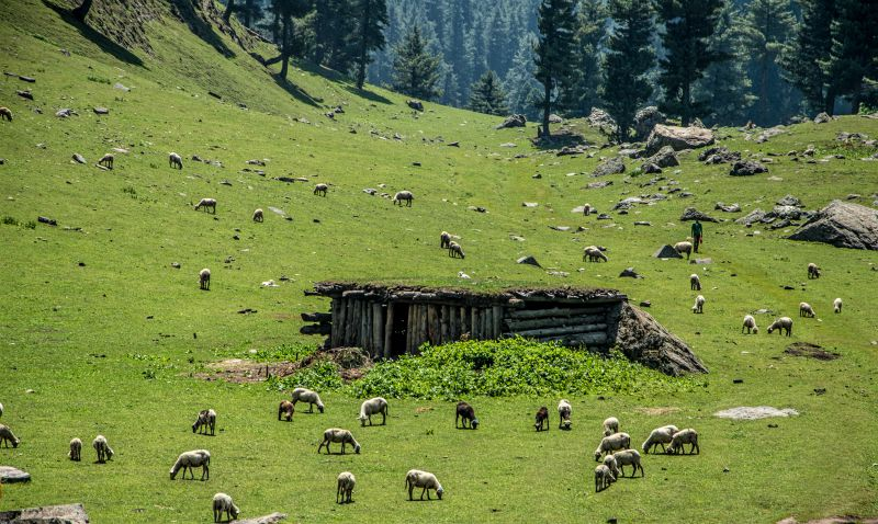 A Gujjar Hut amidst meadows