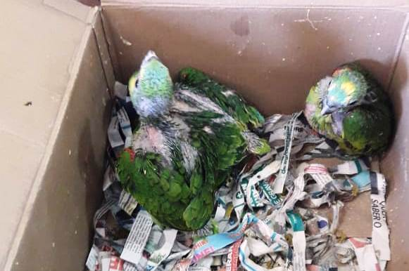 Aves silvestres são apreendidas em Gravataí e homem é preso por crime ambiental