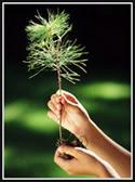 Planting that Birthday Tree