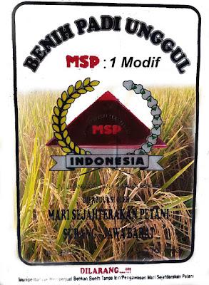 Benih Padi Unggul SERTANI 1 Modif / MSP 1 Modif - 90-95 HST Panen