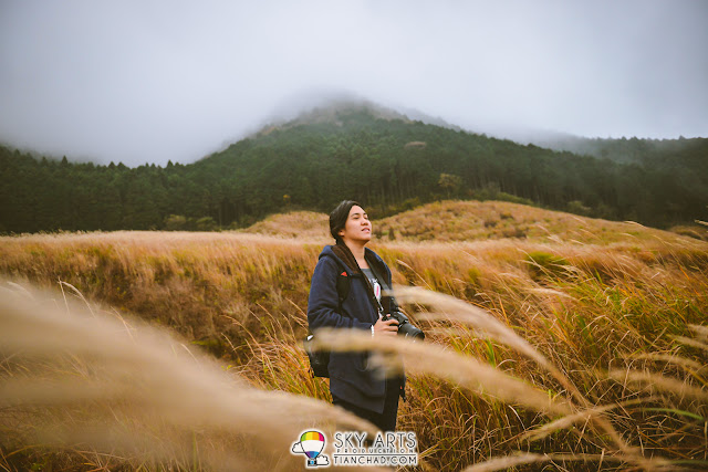 Susuki Grass at Sengokuhara 仙石原日本芒草