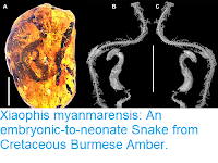 https://sciencythoughts.blogspot.com/2018/07/xiaophis-myanmarensis-embryonic-to.html