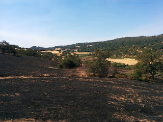Charred fields at Joseph D. Grant County Park, San Jose, California