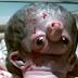 فيديو مخيف  وﻻدة طفل غريب جداً في مصر! تشوه فريد من نوعه!