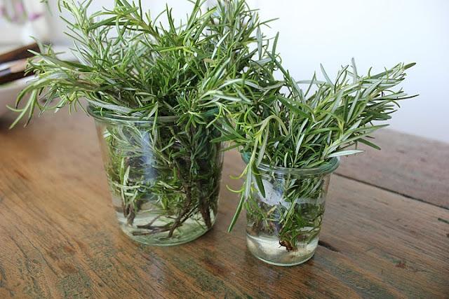rosemary-jars.jpg
